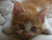 青い目のチャーリー